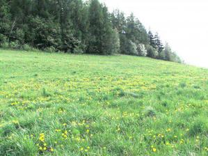 Náš pozemek, no není to tu krásné? :-)