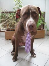 Twixusek se svatebni kravatou privezenou z Shanghaje. :-)