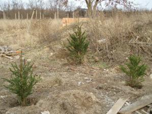 Uz rastu aj vianočne stromceky