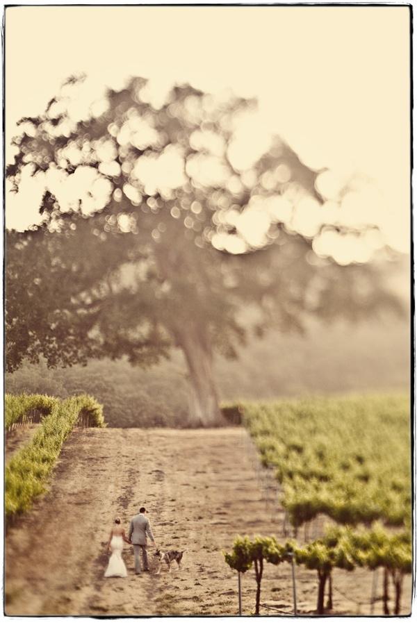 In vino veritas - Obrázek č. 60