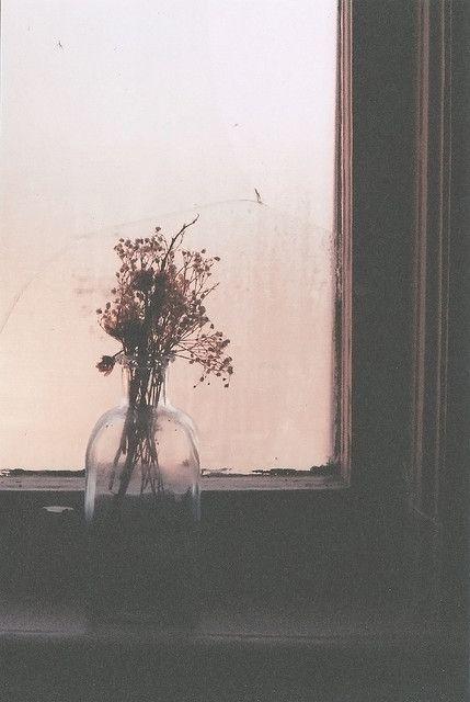 Usušené květiny - Obrázek č. 12