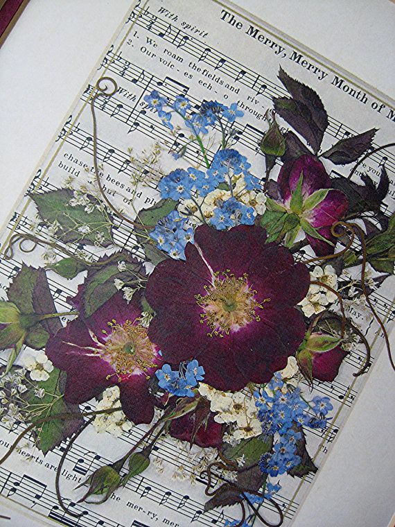 Usušené květiny - Obrázek č. 24