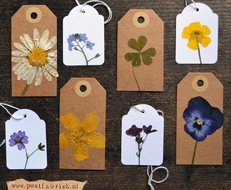 Usušené květiny - Obrázek č. 25