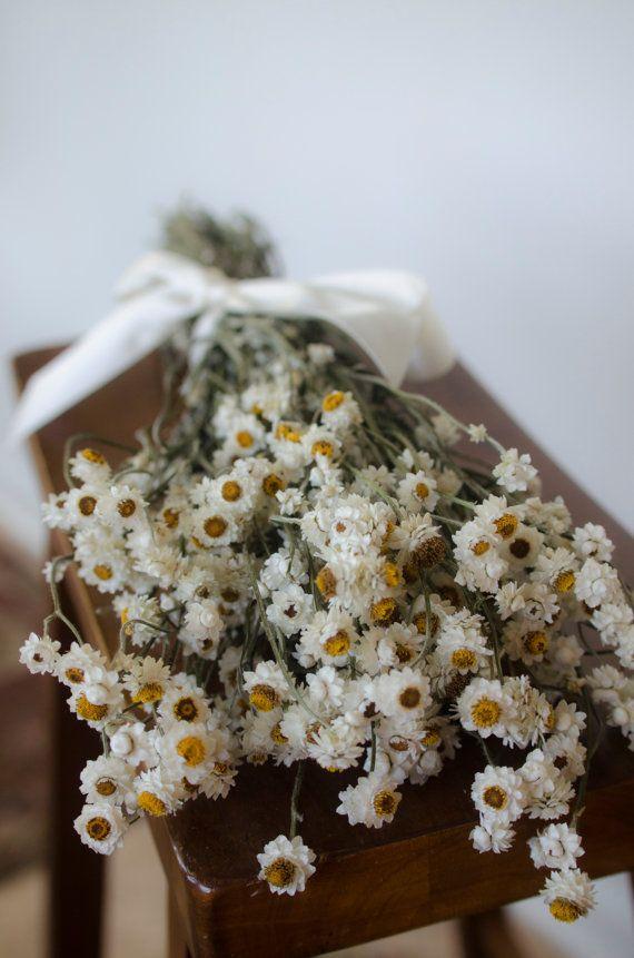 Usušené květiny - Obrázek č. 27
