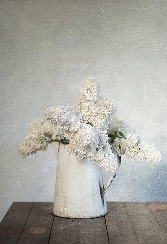 Čistě bílá - Obrázek č. 13