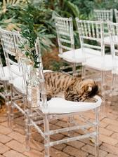 Potkat cestou k oltáři takovýhle kočičí poklad, tak tam ani nedojdu , protože bych jí letěla mazlit :-D