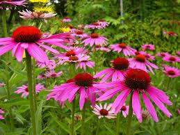 Okrasná záhrada- kvety trvalky - Obrázok č. 2