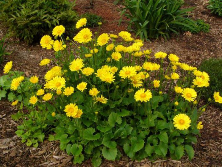 Okrasná záhrada- kvety trvalky - Obrázok č. 4