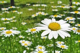 Okrasná záhrada- kvety trvalky - Obrázok č. 7