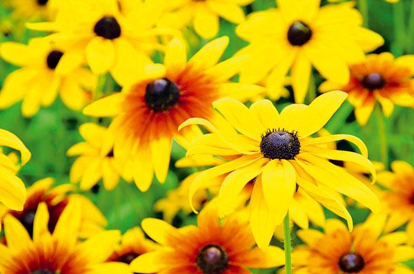 Okrasná záhrada- kvety trvalky - Obrázok č. 10