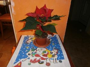 Vánoční hvězda od manžílka
