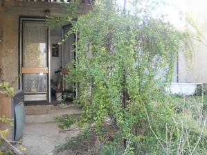 zelen sa tiahne az ku vchodovym dveram