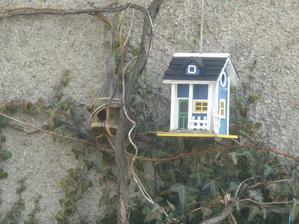 ptačí bydlení