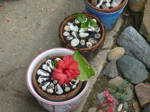 jen zasadím sazenici už má na květ