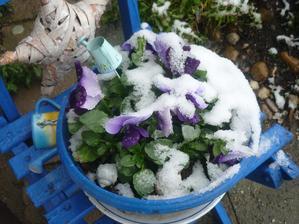 dnes pod sněhem