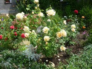 růžím se dařilo na jižní straně
