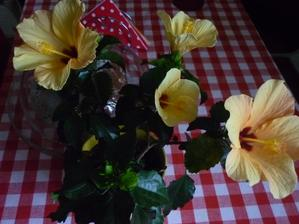 právě se rozvinuly květy  - do rána bude po něm....škoda