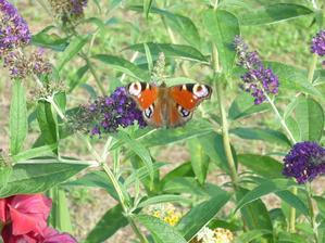 to bylo motýlkú