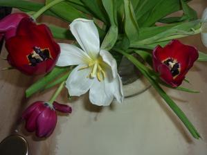 tulipány po pár dnech