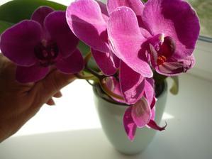 moje jediná orchidej nikdy mi tu nešly  kvete od března