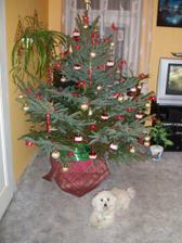 Vánoce měly být už v novém bytečku, ale bohužel se to nestihlo, tak naposled ve starém