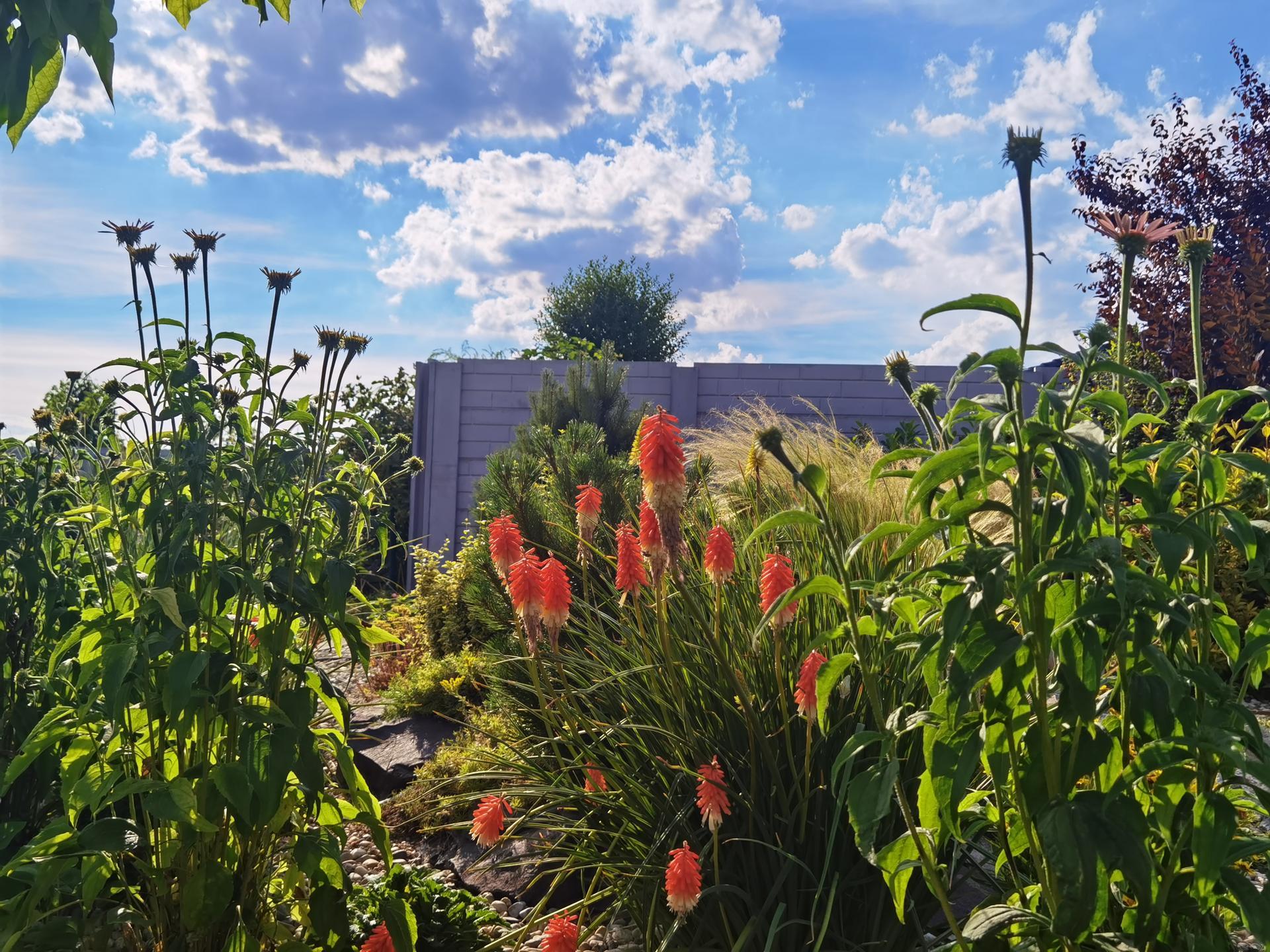 Záhrada 2021 - Obrázok č. 33