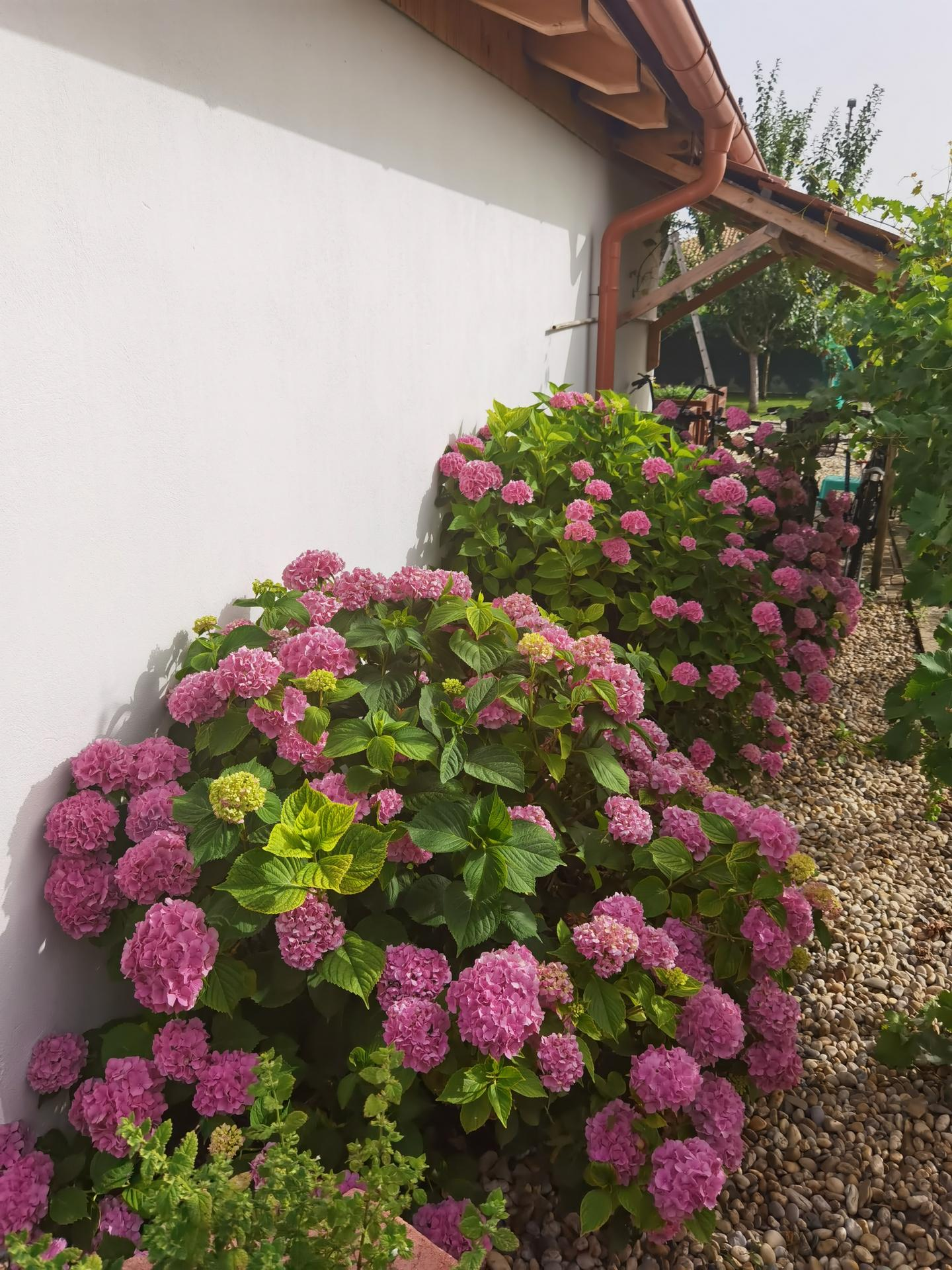 Záhrada 2021 - Obrázok č. 38