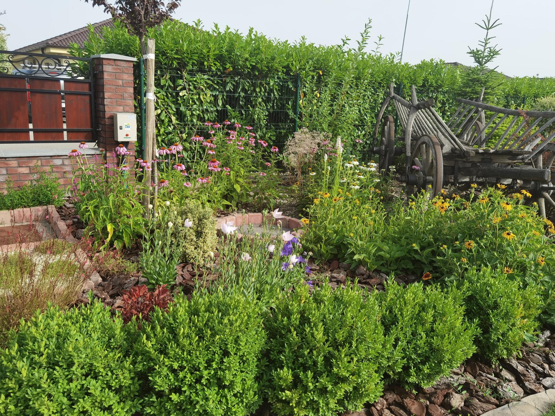 Záhrada 2021 - Obrázok č. 35