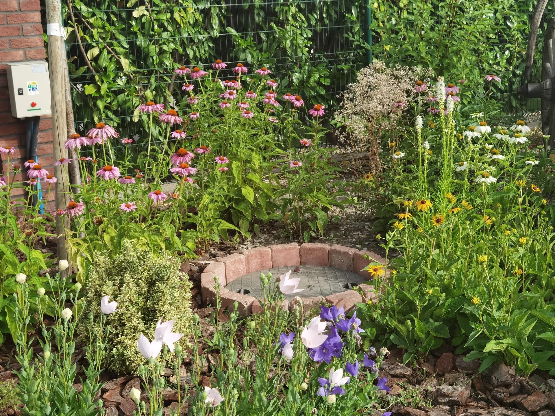 Záhrada 2021 - Obrázok č. 36