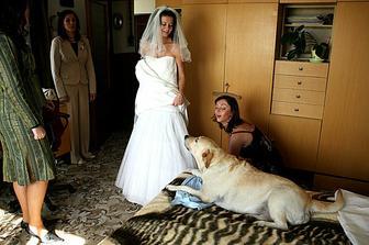 náš pes trošku proti svatbě protestoval