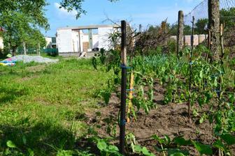 moja záhradka paradajky, papriky, tekvice a hrozno