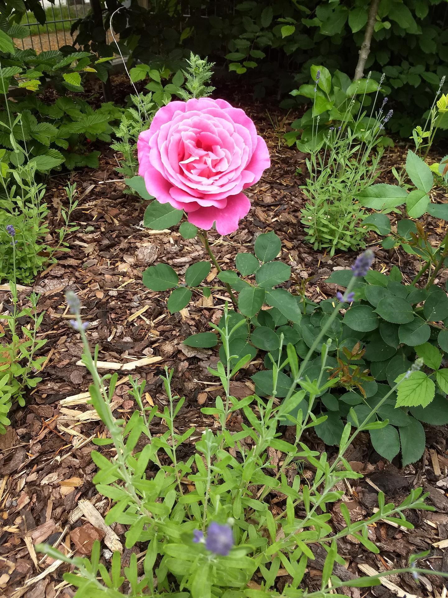 Zahrada po pěti letech - Obrázek č. 9