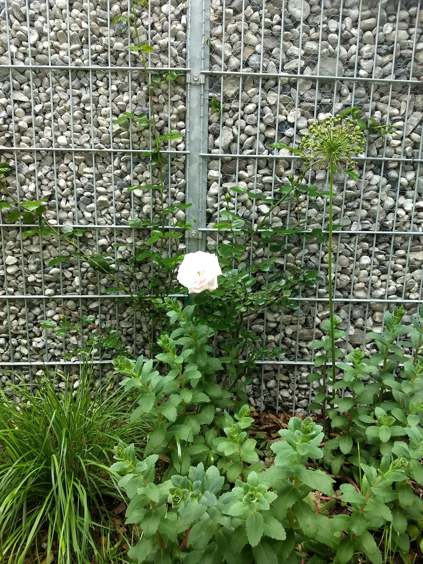 Zahrada po pěti letech - Obrázek č. 7