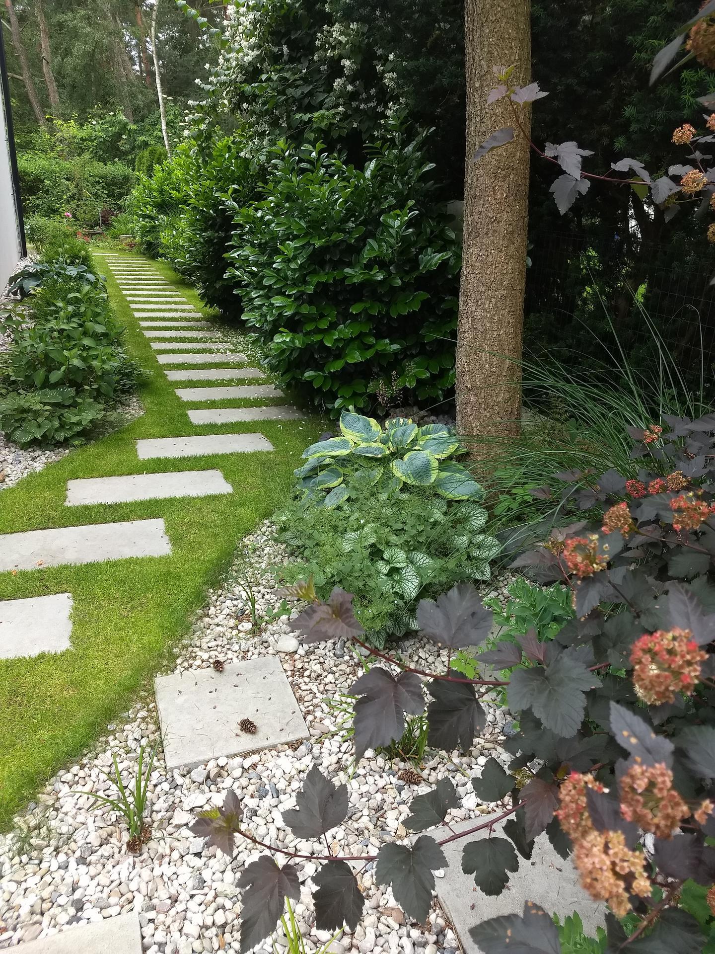 Zahrada po pěti letech - Obrázek č. 4