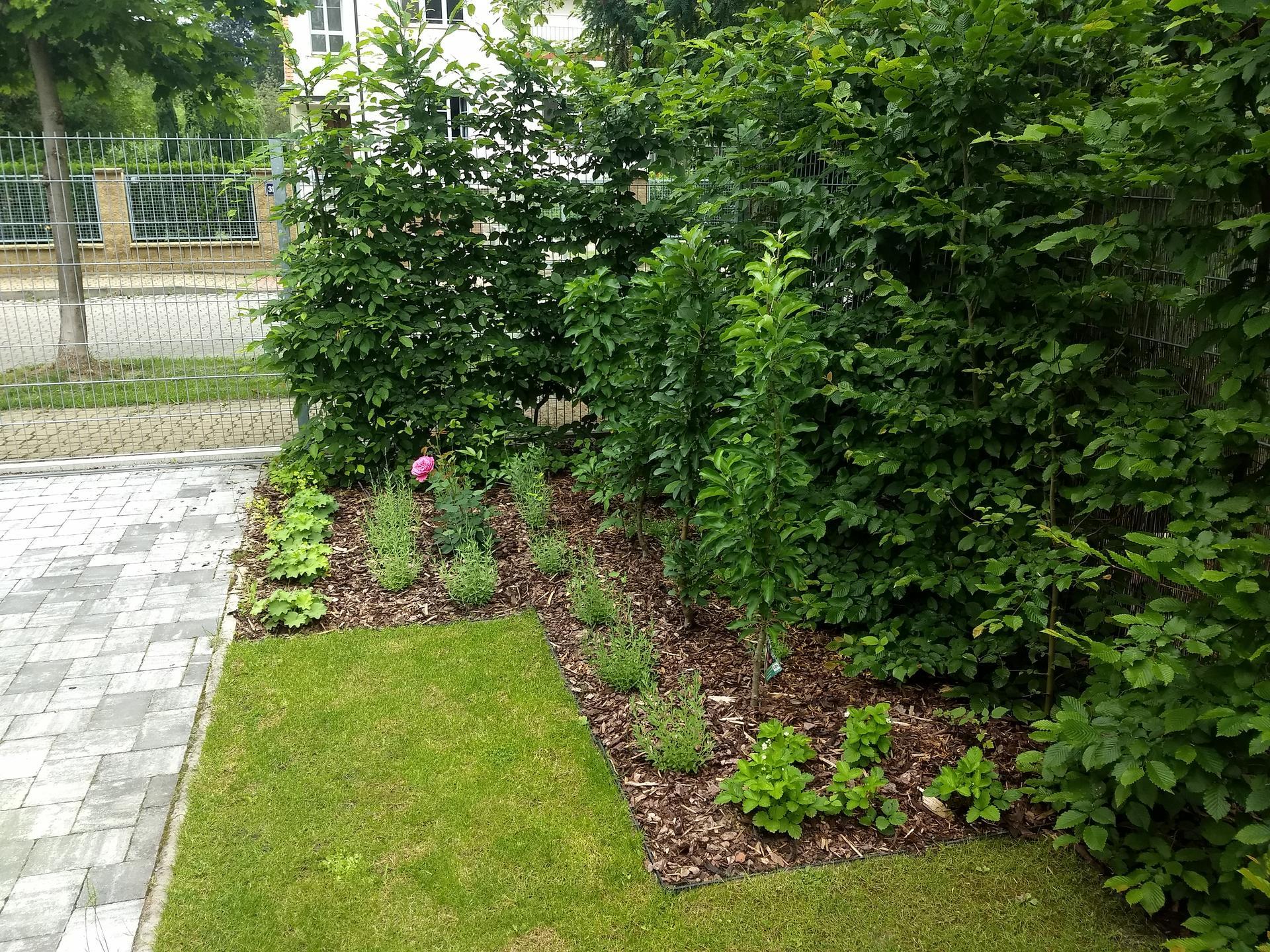 Zahrada po pěti letech - Obrázek č. 6