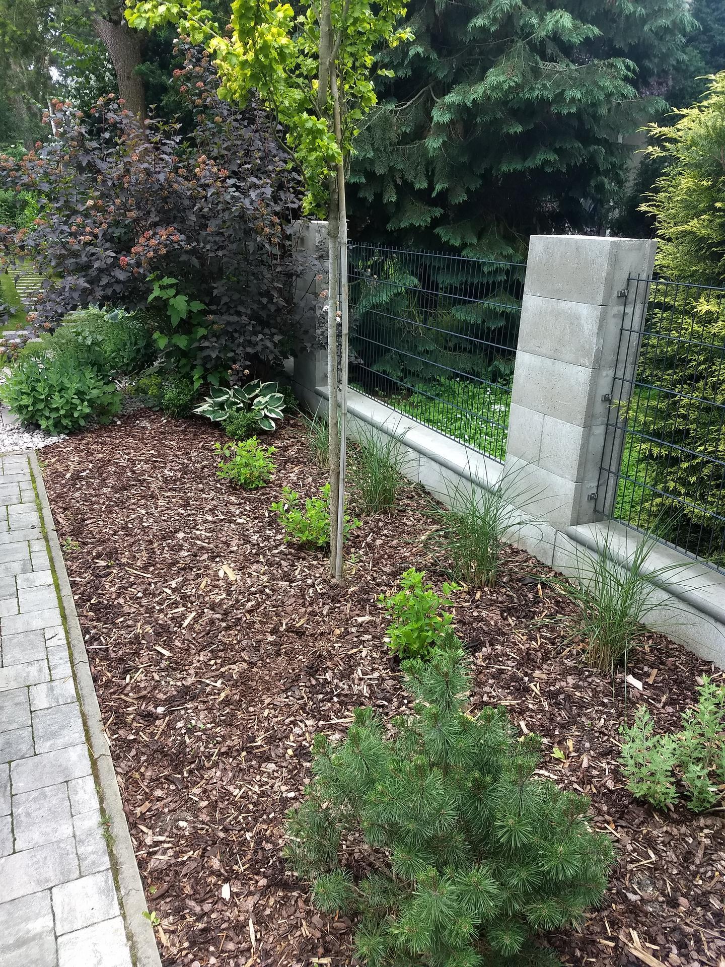 Zahrada po pěti letech - Obrázek č. 5