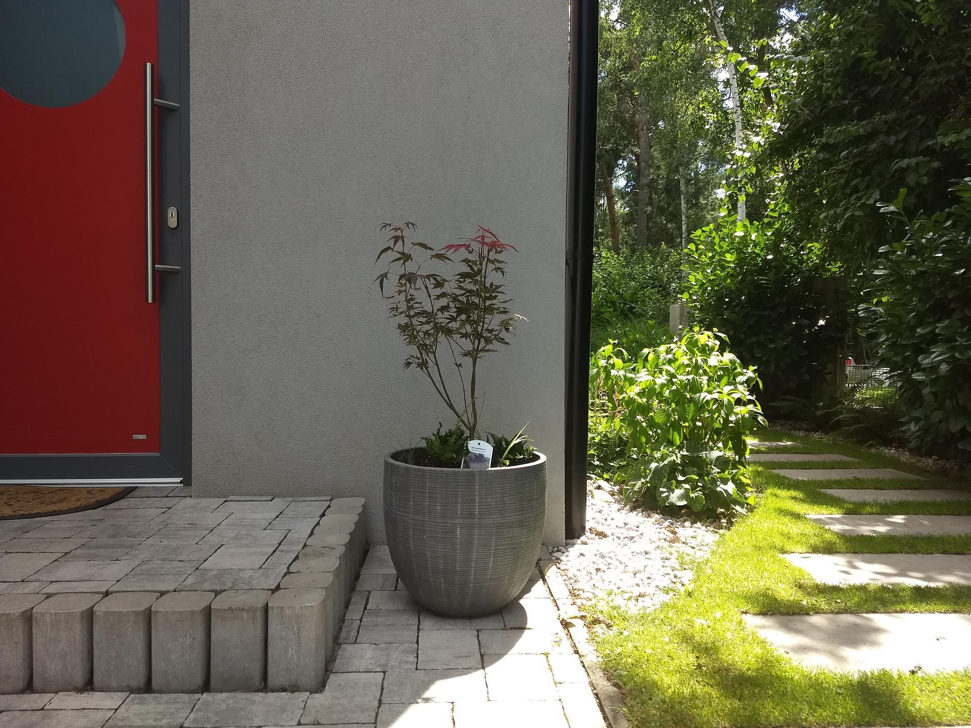 Zahrada po pěti letech - Obrázek č. 11