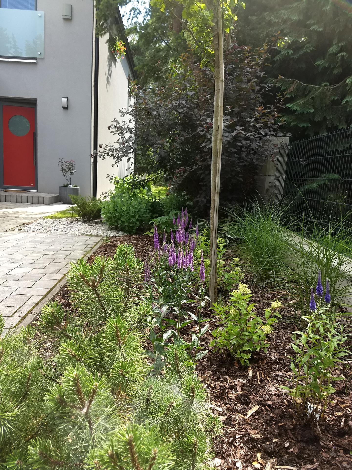 Zahrada po pěti letech - Obrázek č. 10