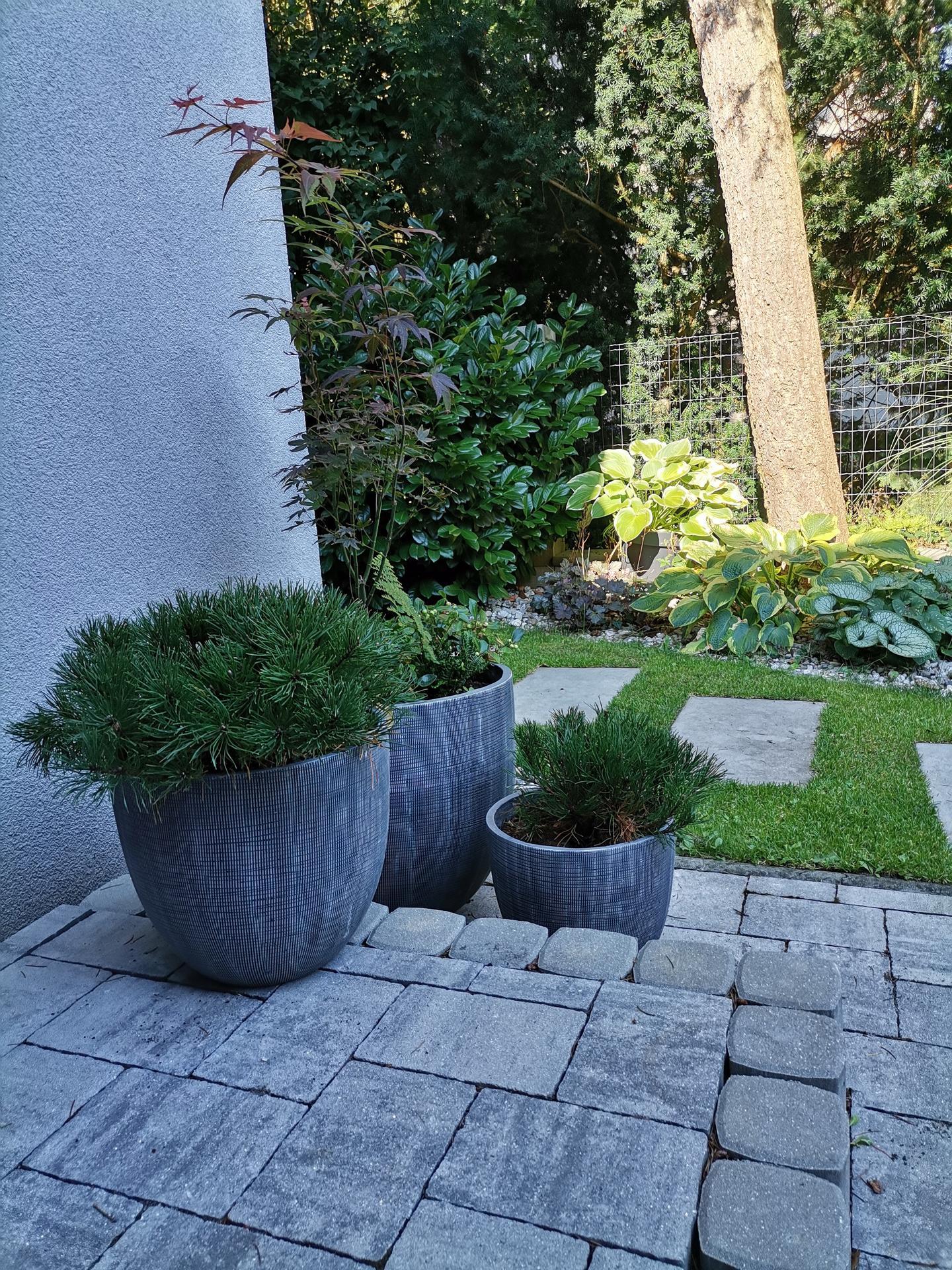 Zahrada po pěti letech - Obrázek č. 14