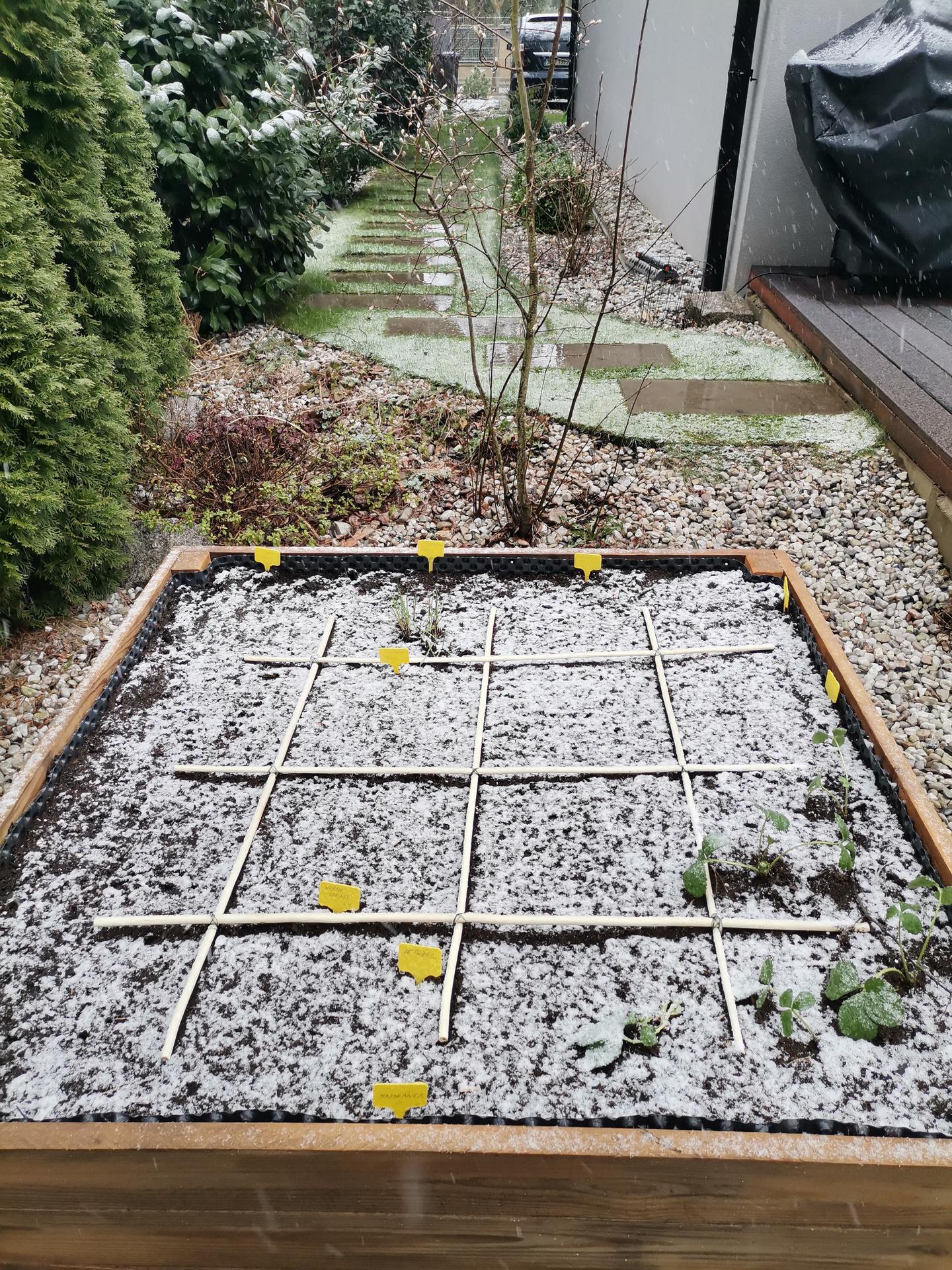 Zahrada po pěti letech - Obrázek č. 16