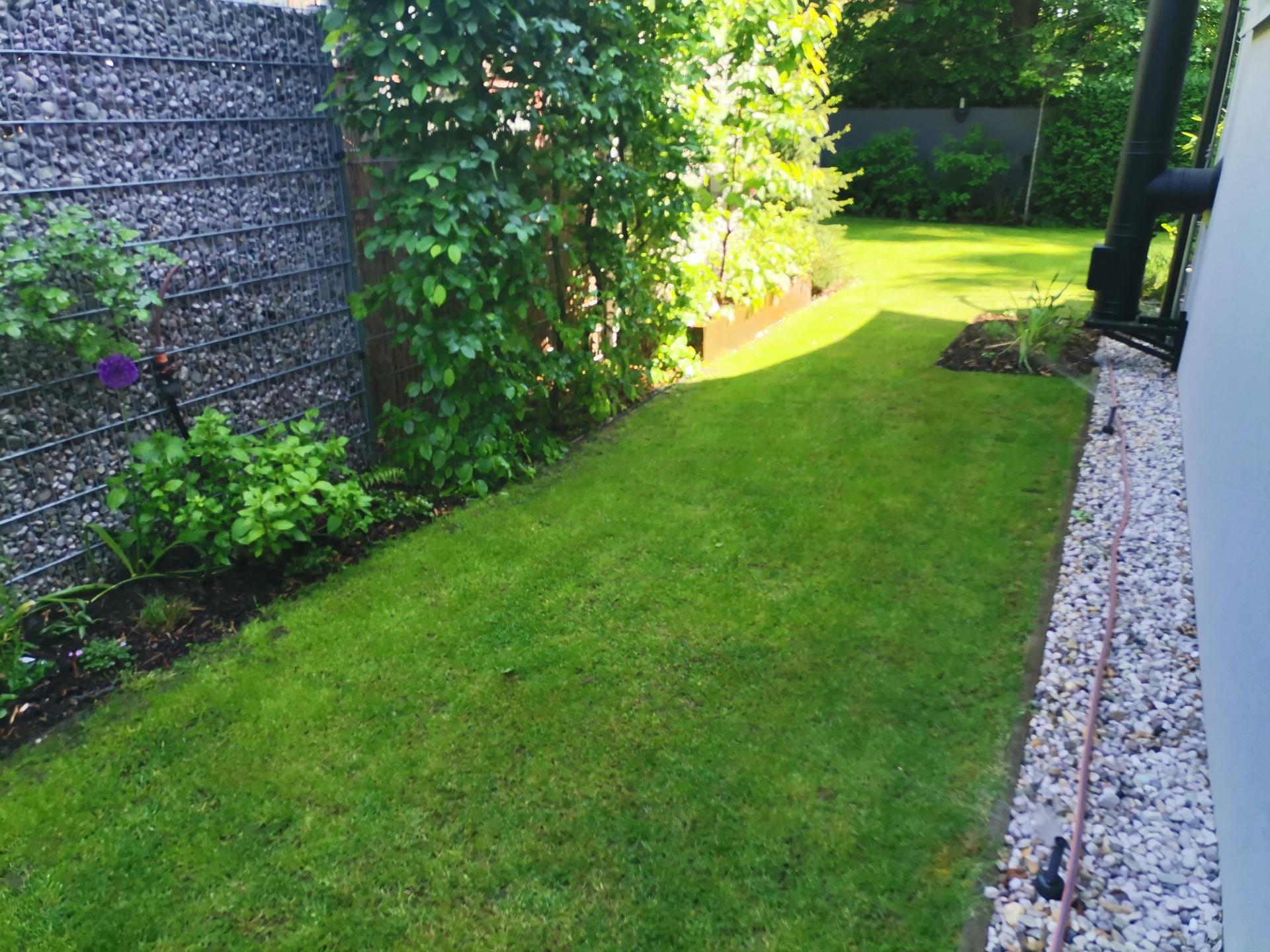 Zahrada po pěti letech - Obrázek č. 22