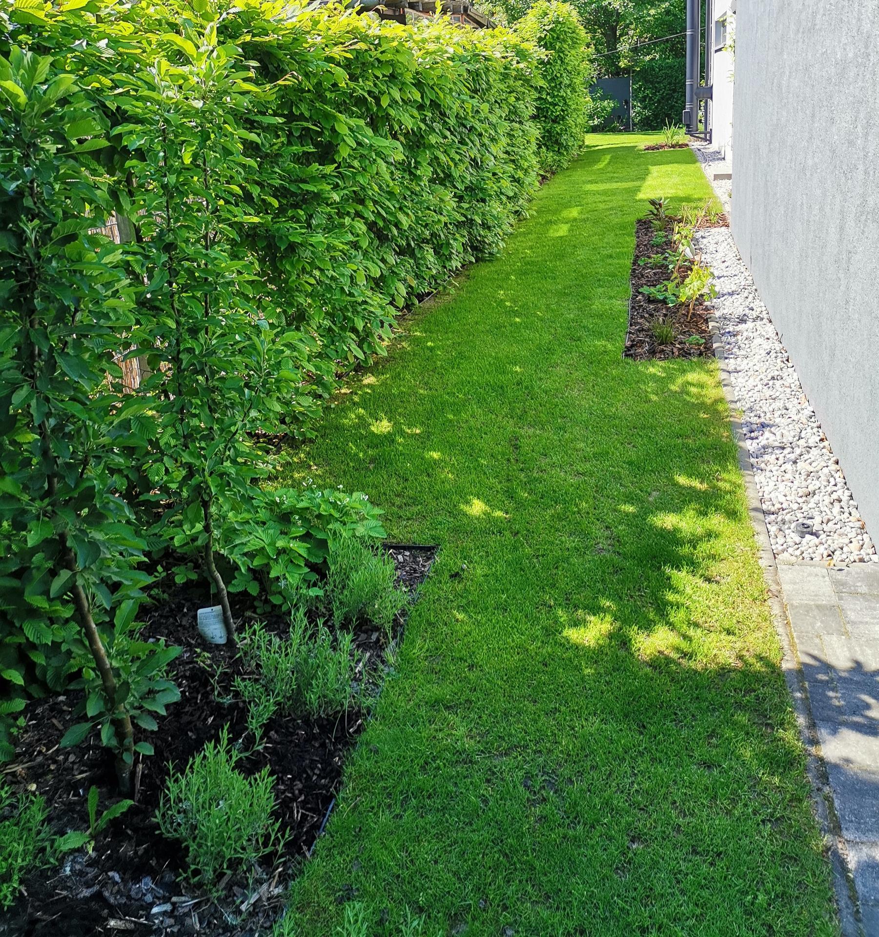 Zahrada po pěti letech - Obrázek č. 26