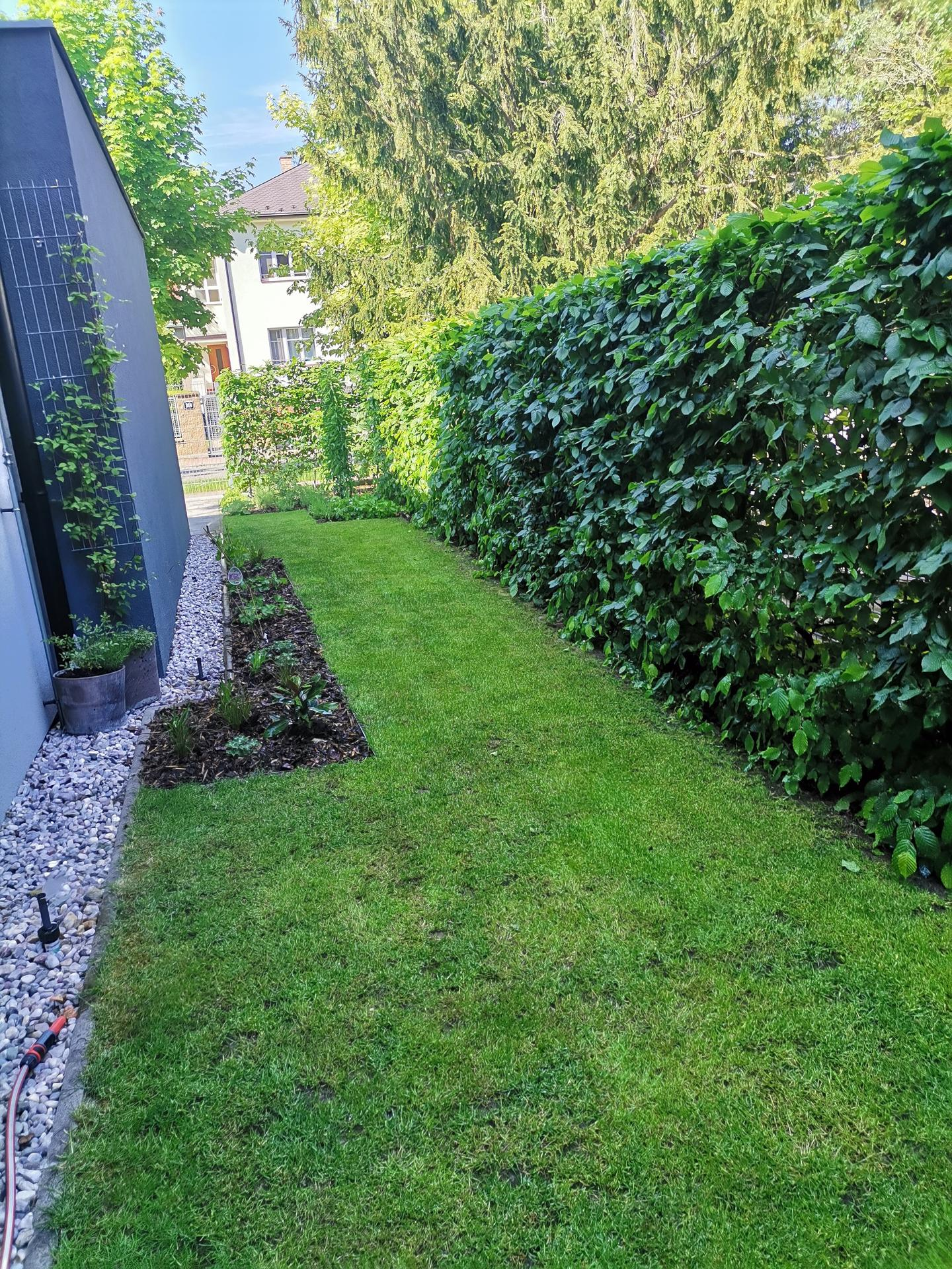 Zahrada po pěti letech - Obrázek č. 24