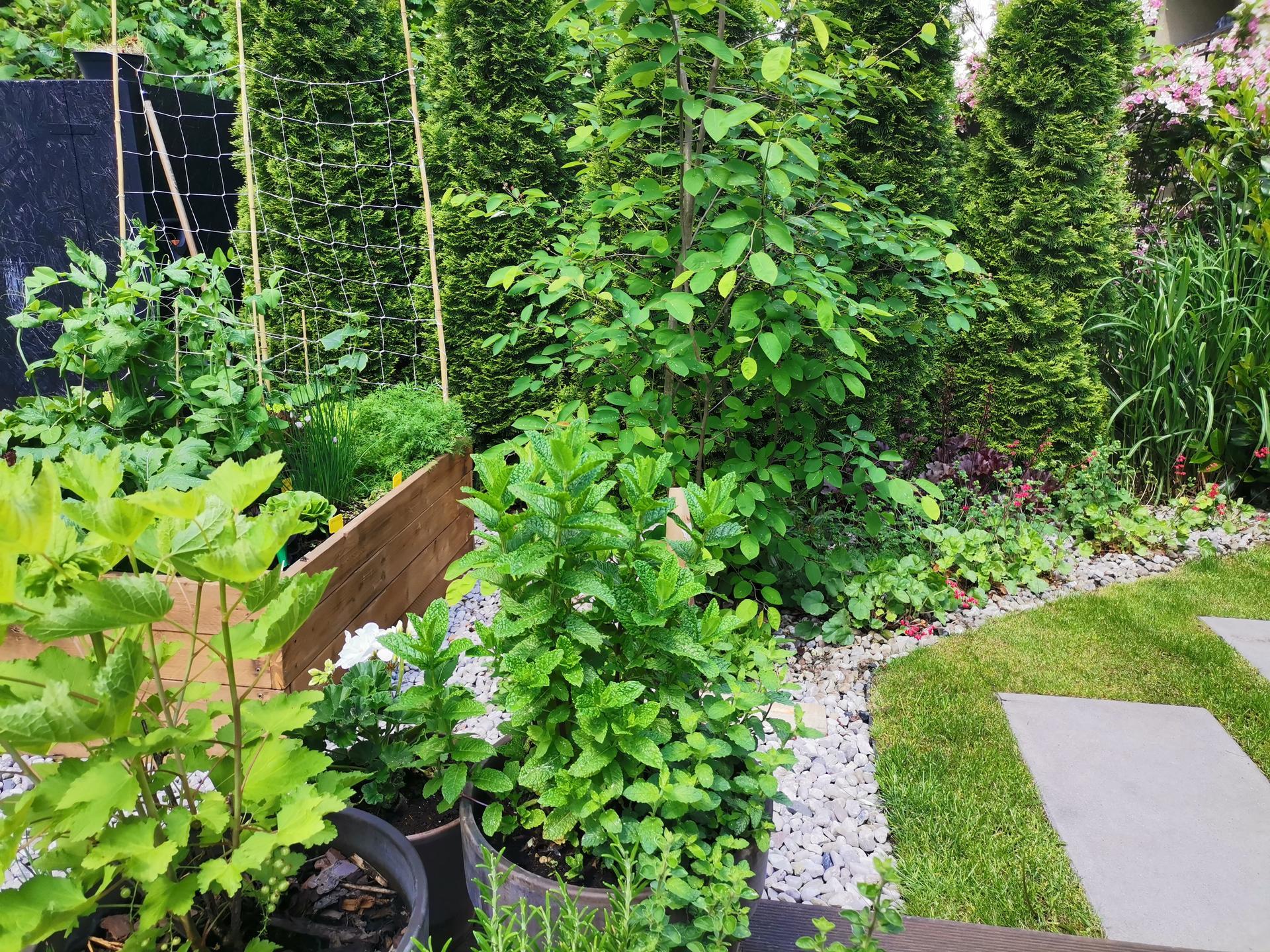 Zahrada po pěti letech - Obrázek č. 21