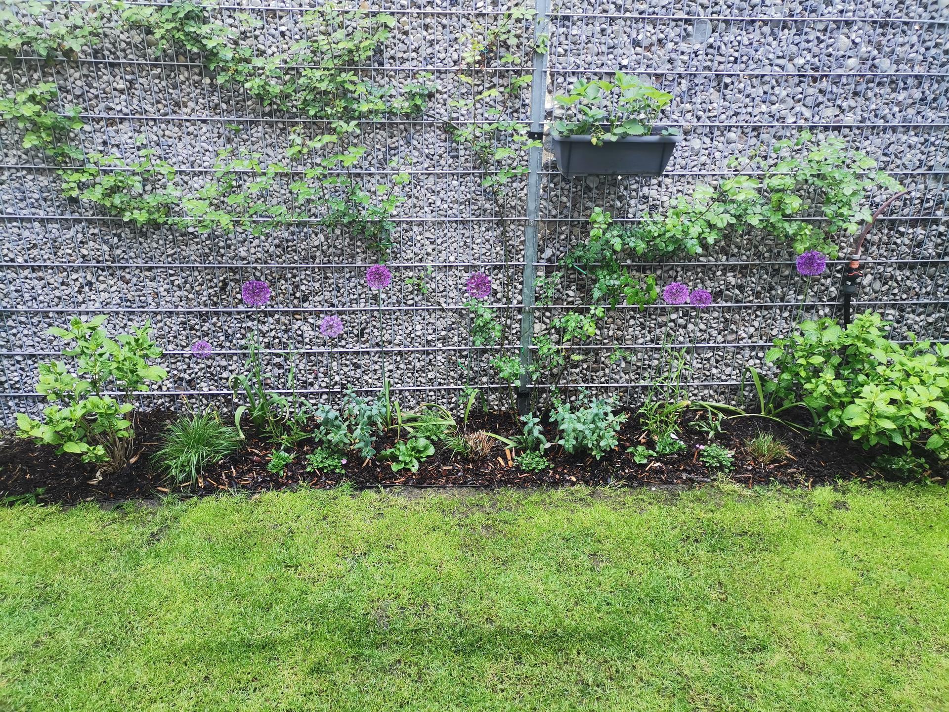 Zahrada po pěti letech - Obrázek č. 23
