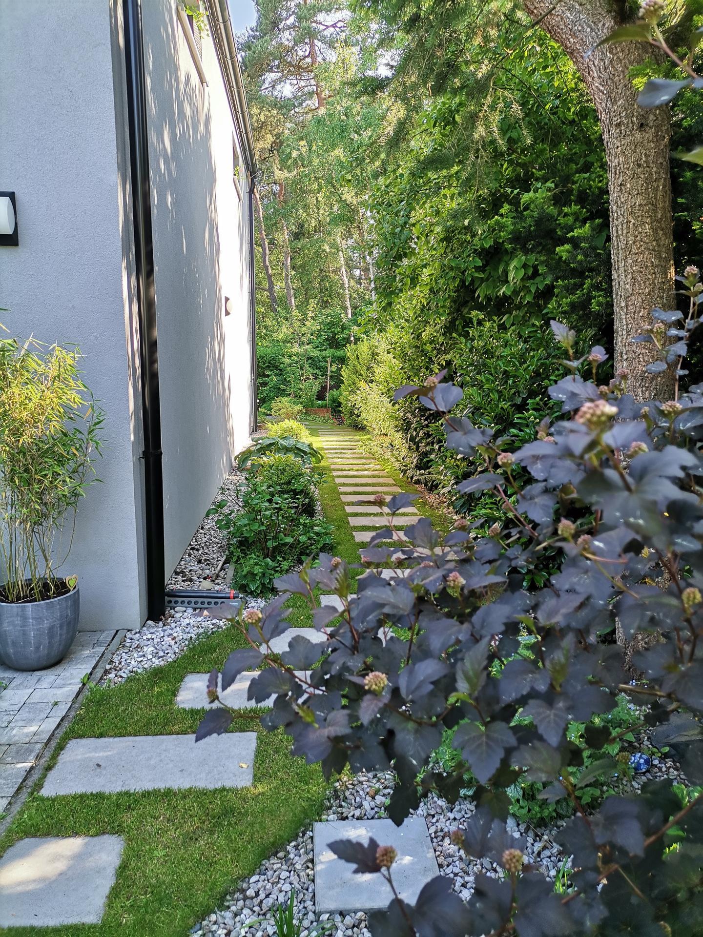 Zahrada po pěti letech - Obrázek č. 28
