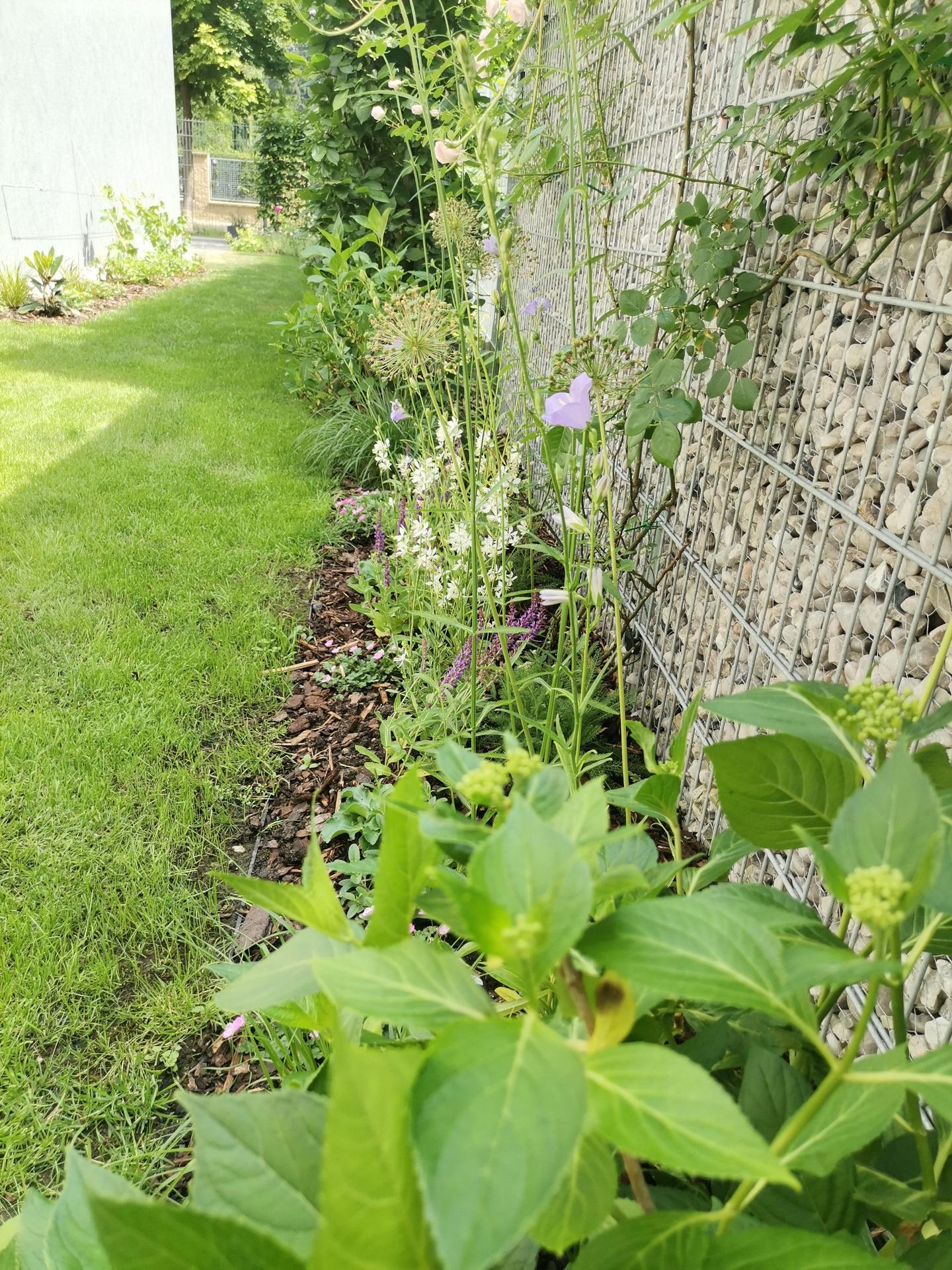 Zahrada po pěti letech - Obrázek č. 31