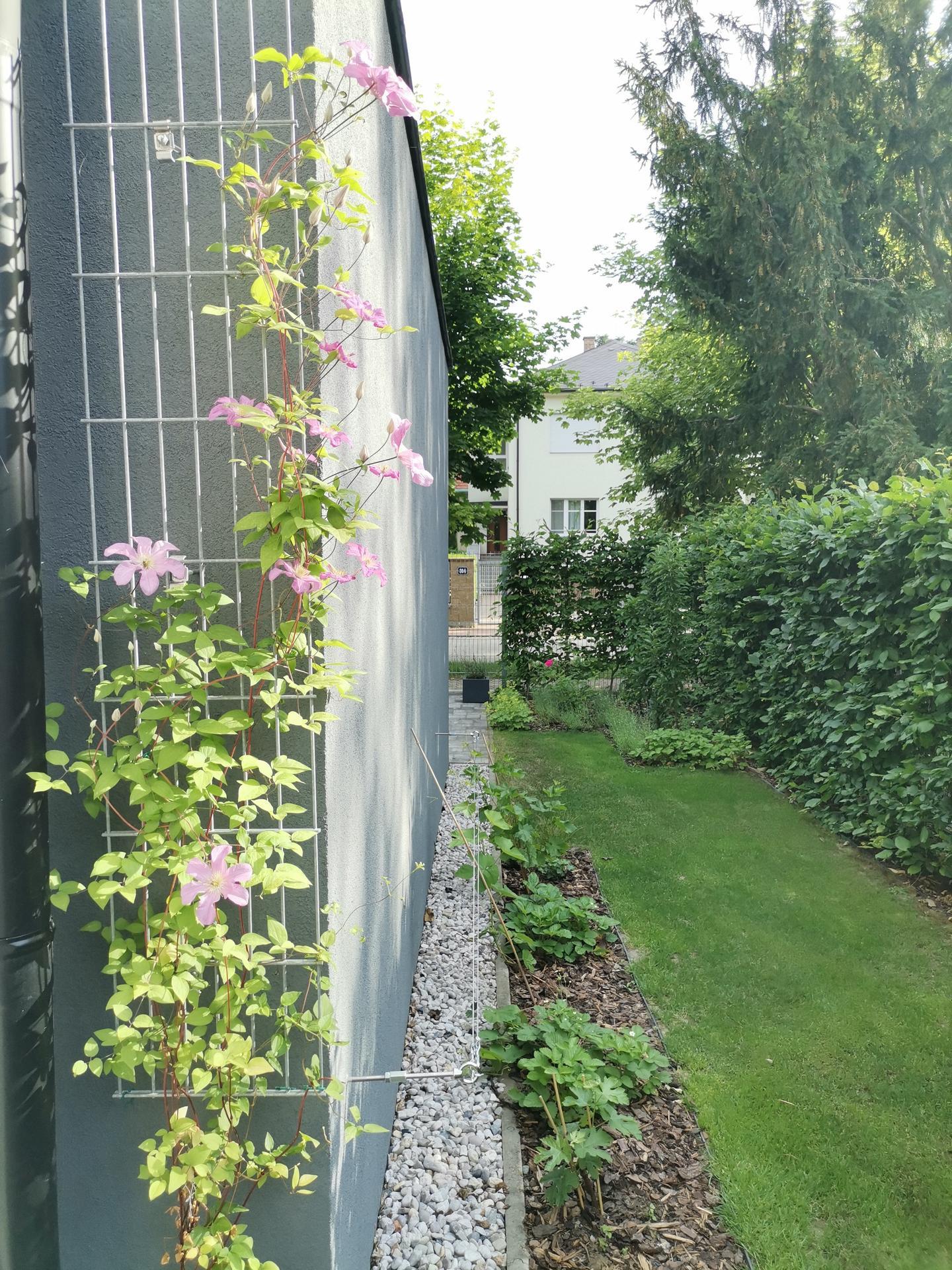 Zahrada po pěti letech - Obrázek č. 34