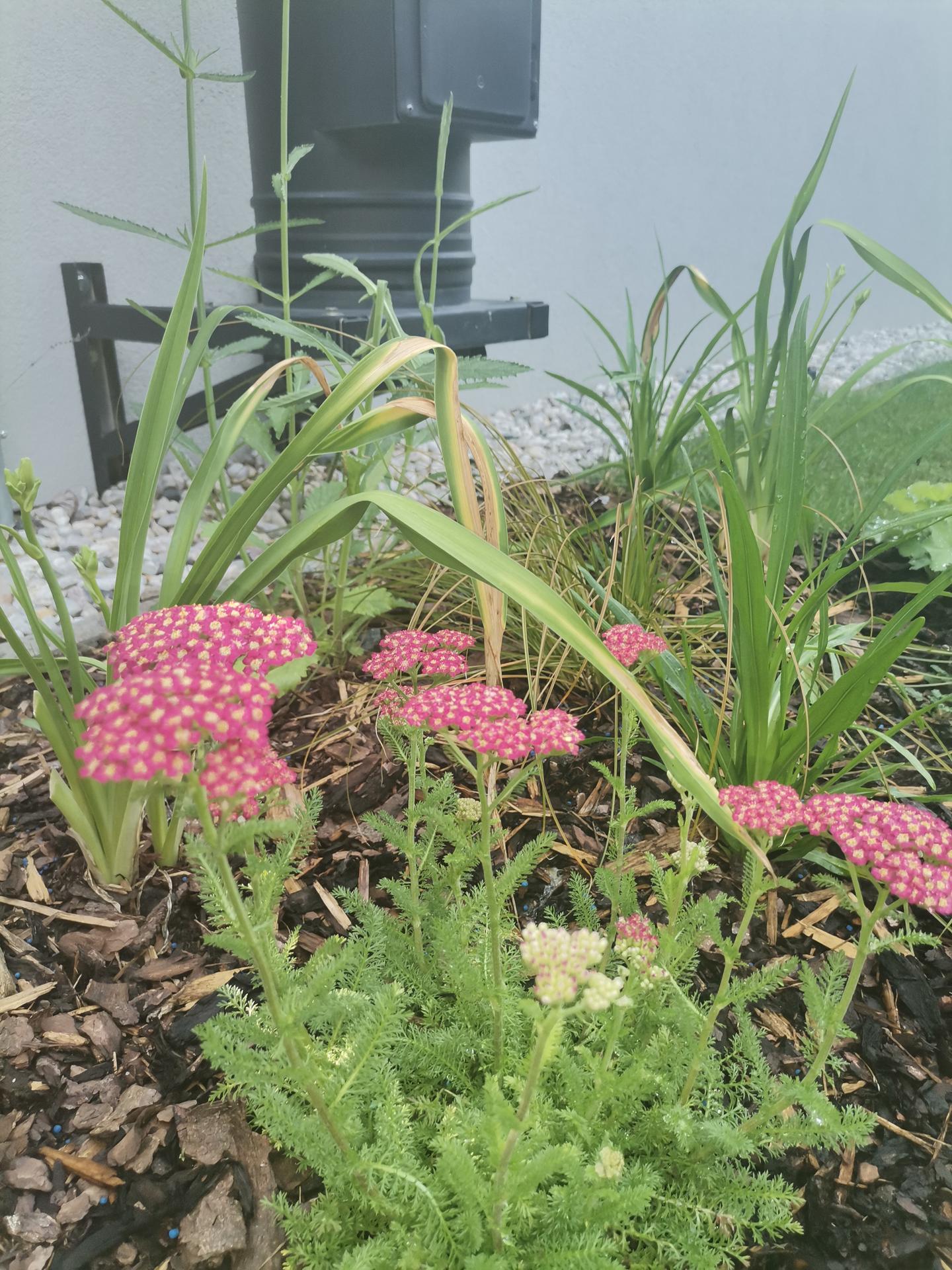 Zahrada po pěti letech - Obrázek č. 39