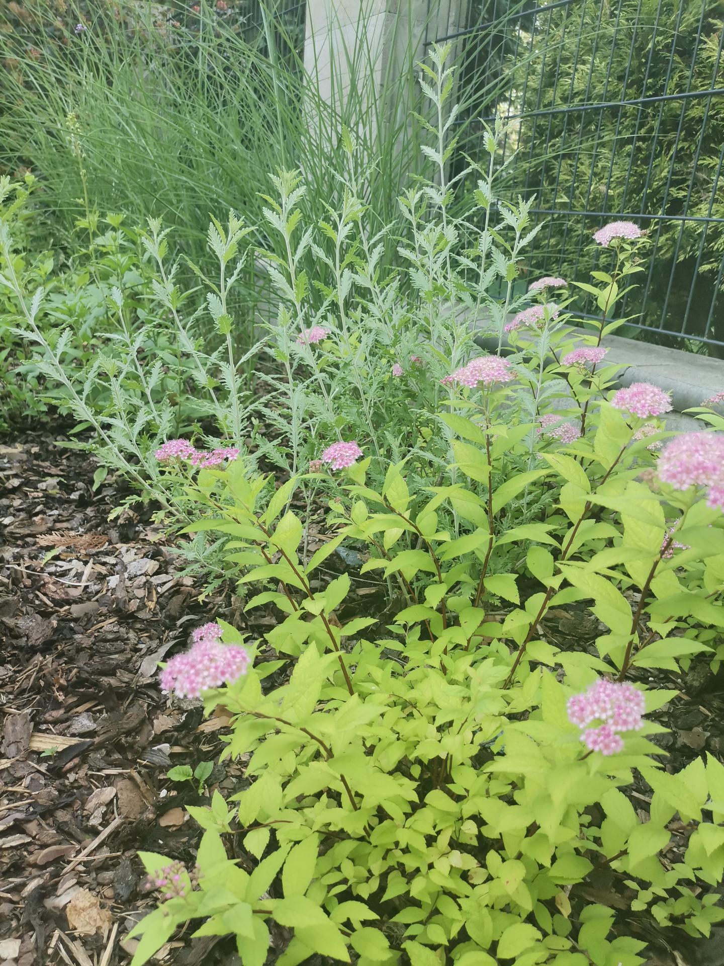 Zahrada po pěti letech - Obrázek č. 37